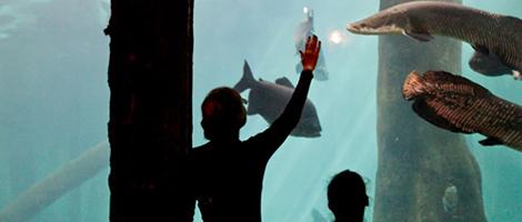 aquario-sp